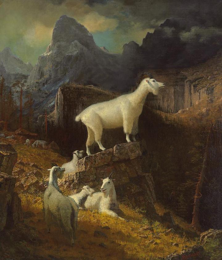 rocky-mountain-goats-albert-bierstadt