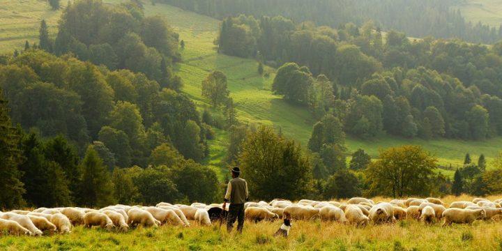 sheep-690198_1920-1280x640